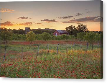 Counry Canvas Print - Texas Hill Country Wildflowers At Sunset 3 by Rob Greebon