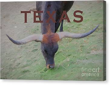 Bulls Canvas Print - Texas Longhorn by David Millenheft