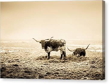 Texas Longhorns Canvas Print