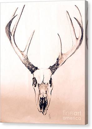 Texas Mount Deer Canvas Print