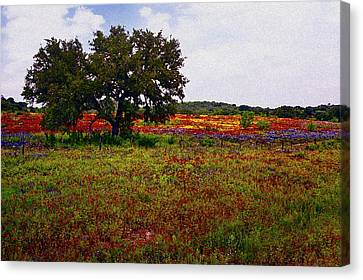 Texas Wildflowers Canvas Print
