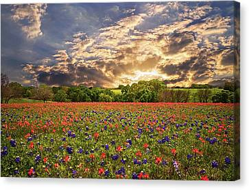 Texas Wildflowers Under Sunset Skies Canvas Print