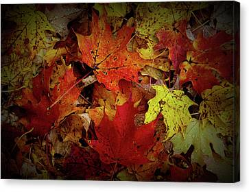 Texture Drama Autumn Leaves Canvas Print