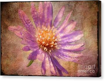 Textured Aster Canvas Print by Lois Bryan