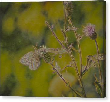 Textured Butterfly 1   Canvas Print by Leif Sohlman