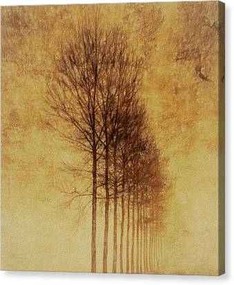 Textured Eerie Trees Canvas Print by Dan Sproul
