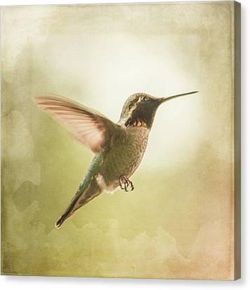 Hummingbird In Flight - Textured Canvas Print