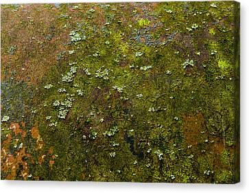 Textured Landscape Canvas Print