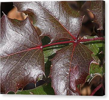 Canvas Print featuring the photograph Textured Leaves by Doris Potter