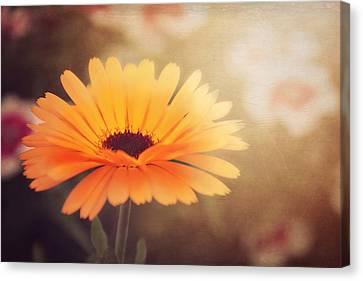 Textured Marigold Canvas Print by Carol Japp