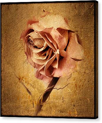 Textured Rose Canvas Print by Jessica Jenney