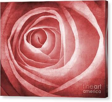 Textured Rose Macro Canvas Print by Meirion Matthias