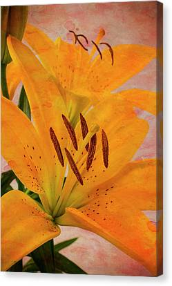 Textured Tiger Lily Canvas Print