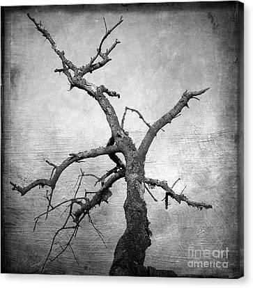 Textured Tree Canvas Print by Bernard Jaubert