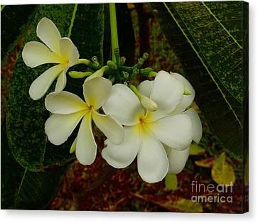 Thai Flowers II Canvas Print by Louise Fahy