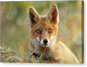 Kit Fox Canvas Print - That Face - Cute Fox Kit by Roeselien Raimond