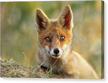 That Face - Cute Fox Kit Canvas Print by Roeselien Raimond