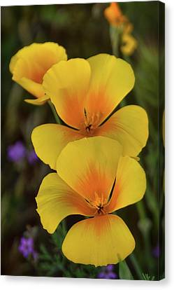 Canvas Print featuring the photograph That Golden Spring Glow  by Saija Lehtonen