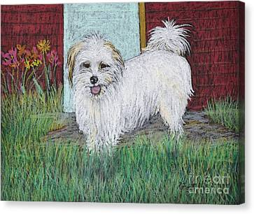 That Little White Dog Canvas Print by Reb Frost
