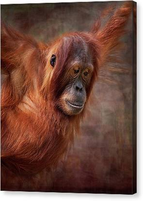 That Look Canvas Print by Heather Thorning