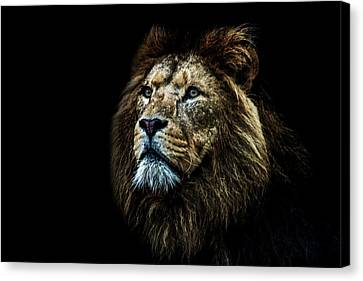 That Look Canvas Print by Martin Newman