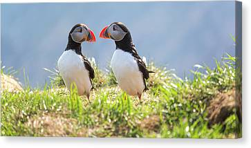 Puffin Canvas Print - That Moment When You Realize You Left Something Vital Behind  by Betsy Knapp