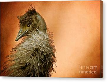 That Shy Come-hither Stare Canvas Print by Lois Bryan