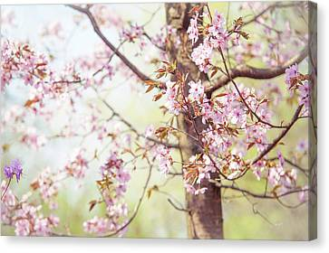 Canvas Print featuring the photograph That Tender Joyful Spring by Jenny Rainbow