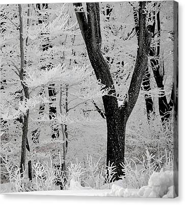 That Winter Canvas Print by Odd Jeppesen