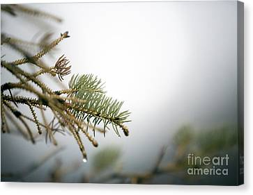 Thaw Canvas Print by Jeannie Burleson