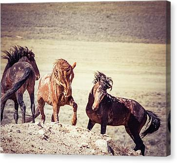 Canvas Print featuring the photograph The 3 Amigos by Mary Hone