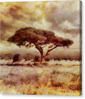 The African Tree By Sarah Kirk Canvas Print