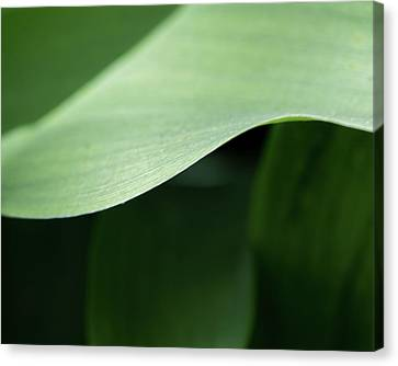 The Allure Of A Curve - Canvas Print