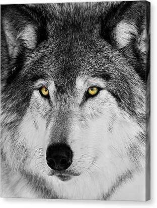 Canvas Print featuring the photograph The Alpha Portrait by Mircea Costina Photography