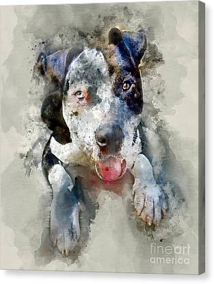 The American Pitbull Canvas Print by Jon Neidert