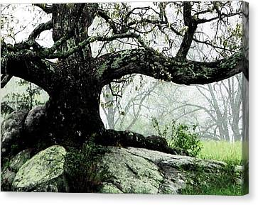 The Ancient One Canvas Print by Angela Davies
