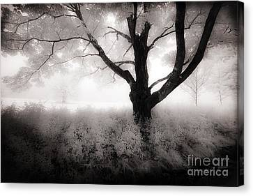 The Ancient Tree Canvas Print by Craig J Satterlee