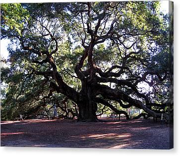 The Angel Oak In Charleston Sc Canvas Print by Susanne Van Hulst