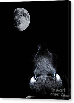 Wings Domain Canvas Print - The Ape And The Moon . Photoart . R7917 by Wingsdomain Art and Photography