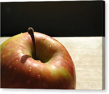 The Apple Stem Canvas Print
