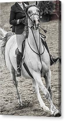 Braids Canvas Print - The Approach Show Jumping by Betsy Knapp