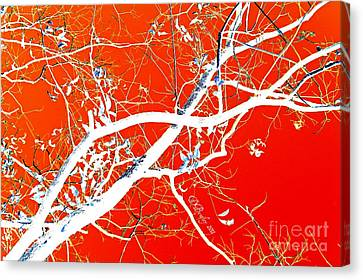 The Asian Tree Canvas Print by Donna Bentley
