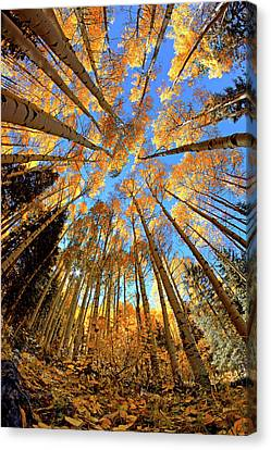 Canvas Print featuring the photograph The Aspens Above - Colorful Colorado - Fall by Jason Politte