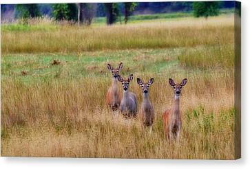 The Audience Canvas Print by Annie Pflueger