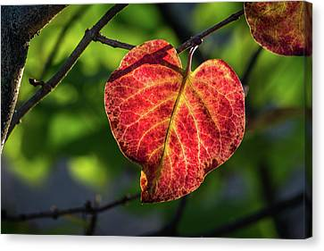 Canvas Print featuring the photograph The Autumn Heart by Bill Pevlor