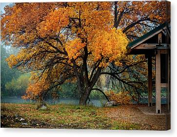 Autumn Leaf On Water Canvas Print - The Autumn Tree by TL Mair