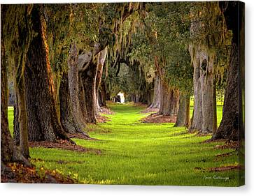 Canvas Print featuring the photograph The Avenue Of Oaks 4 St Simons Island Ga Art by Reid Callaway