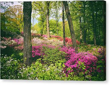 The Azalea Woodland Canvas Print by Jessica Jenney