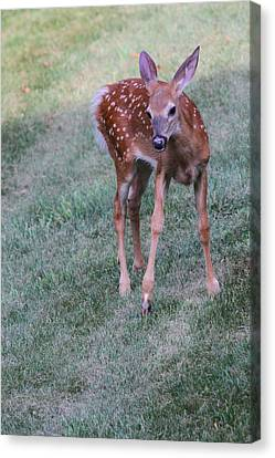 The Bambi Stance Canvas Print by Karol Livote