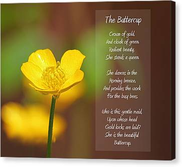 The Beautiful Buttercup Poem Canvas Print by Tracie Kaska